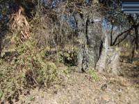 Land in Malelane