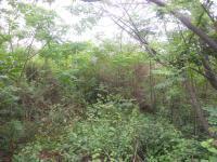 Land in Pinetown