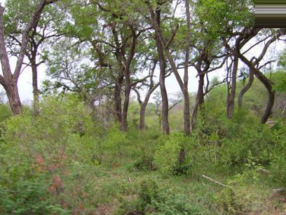 Land For Sale in Hoedspruit - Private Sale - MR056461