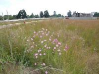 Land for Sale for sale in Honeydew