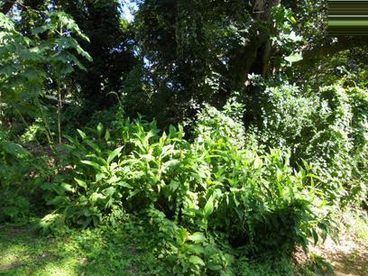 Land for Sale For Sale in Umtentweni - Private Sale - MR072574