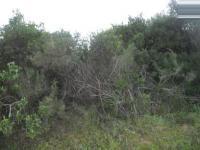 Land in Wilderness