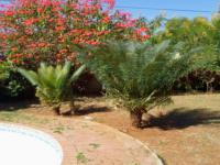Garden of property in Mokopane (Potgietersrust)