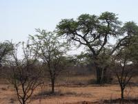 Land for Sale for sale in Kathu