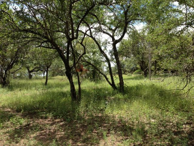 Land for Sale For Sale in Marloth Park - Private Sale - MR100093