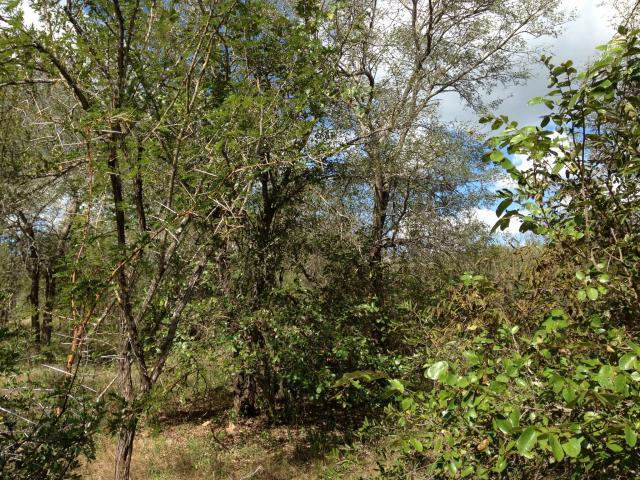 Land for Sale For Sale in Marloth Park - Home Sell - MR100095