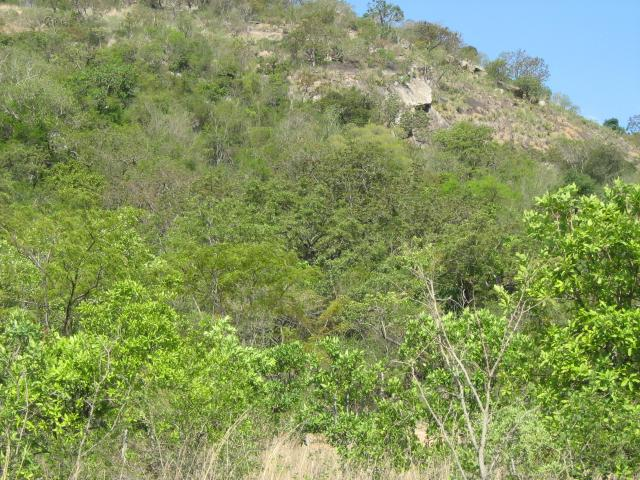 Land for Sale For Sale in Nelspruit Central - Private Sale - MR101501