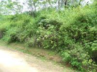 Land for Sale for sale in Ramsgate