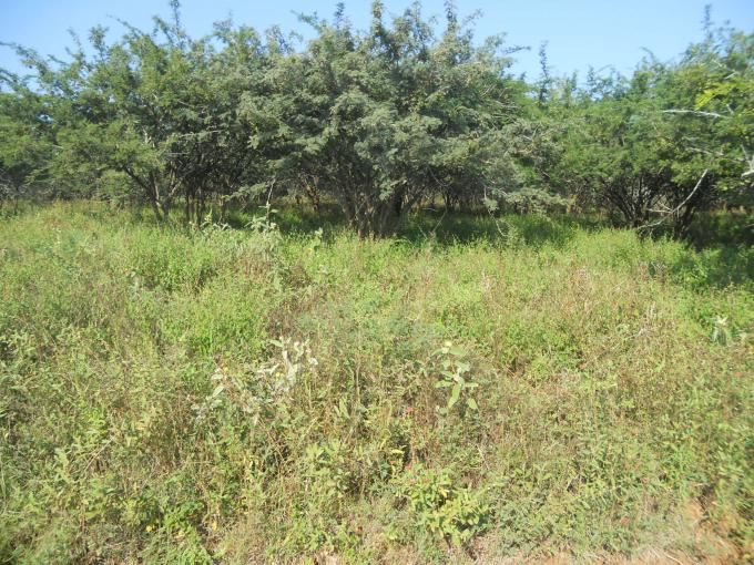 Absa Bank Trust Property Land for Sale For Sale in Marloth Park - MR102134