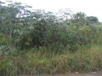Land for Sale for sale in Howick