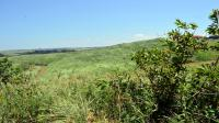 Land for Sale for sale in Elysium