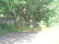 Farm in Krugersdorp