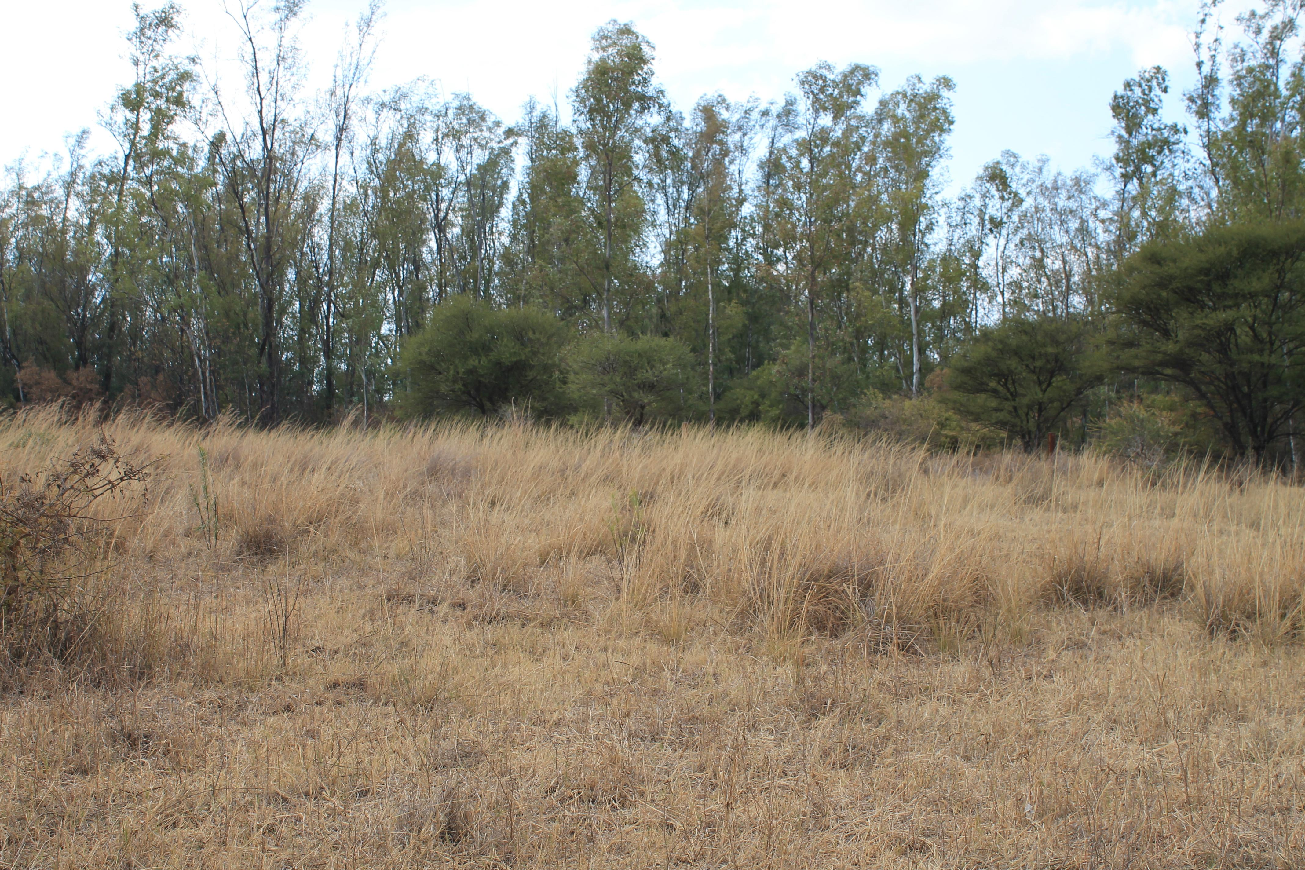 Land For Sale in Bela-Bela (Warmbad) - Private Sale - MR132391