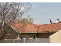 Spaces - 9 square meters of property in Secunda