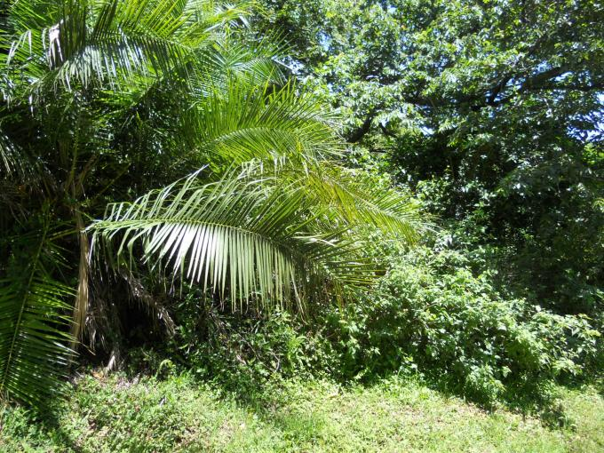 Land for Sale For Sale in Port Edward - Home Sell - MR138635