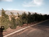 Land for Sale for sale in Tulbagh