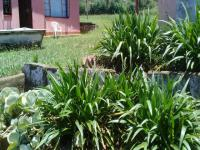 Backyard of property in Edendale-KZN