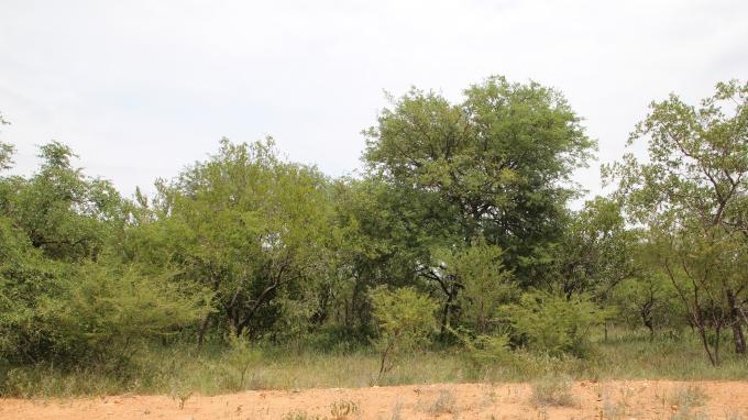 Land for Sale For Sale in Hoedspruit - MR369711